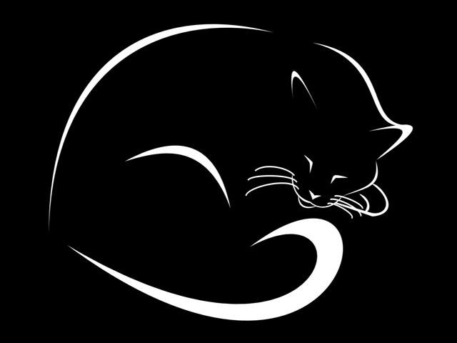 силуэт кошки на черном фоне