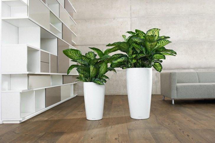 Комнатные цветы и растения для дома и офиса