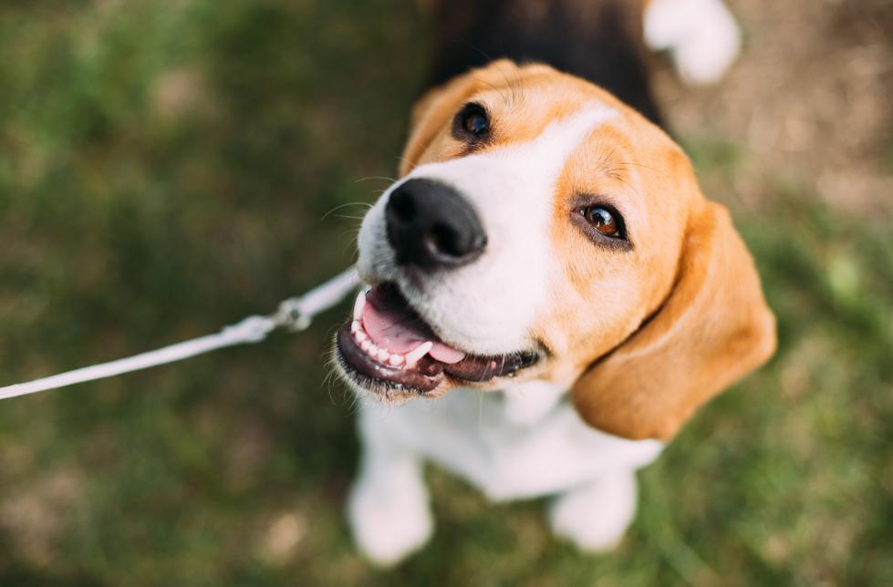 Софт для домашних животных