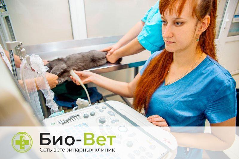 Ветеринарное оборудование от Biovet