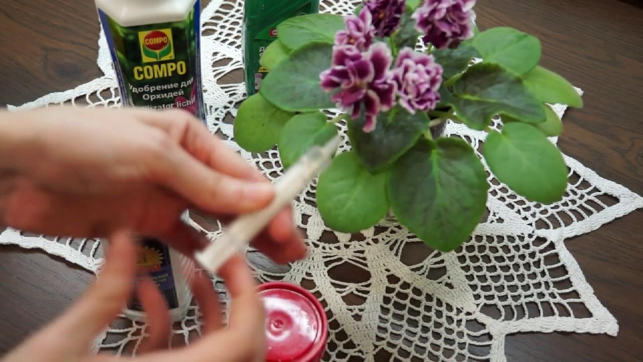 Правила добрива орхідей та фіалок: сезонні добрива та популярні підгодовування